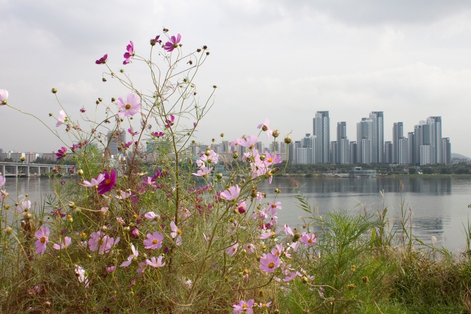 flowers-and-city