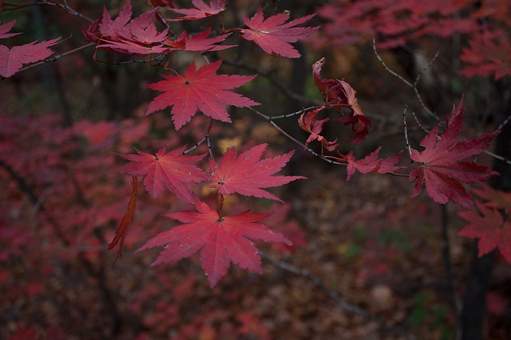 bukhansan-fall-leaves